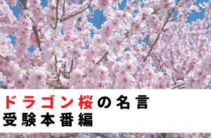 ドラゴン桜の名言|受験本番編